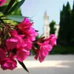 Mi Querida Andalucía