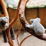 Celebrating Australia: 'Straya Day and the Lunar New Year