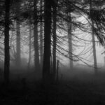 5 of the World's Most Haunted Forests That Will Give You Goosebumps