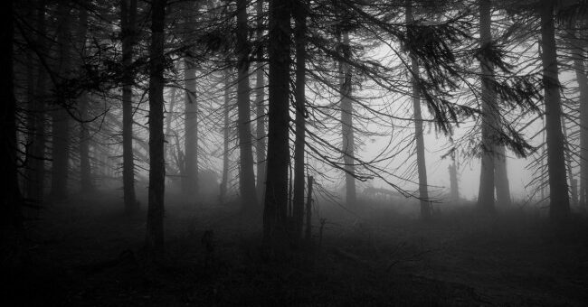 5 Haunted Forests That Will Give You Goosebumps