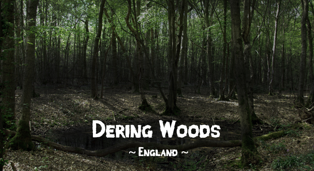 Haunted forests: Dering Woods, Pluckley, Kent, England