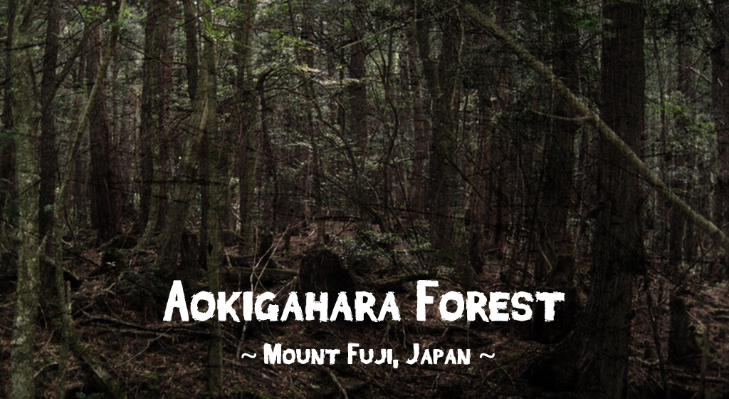 Aokigahara Forest, Mount Fuji, Japan