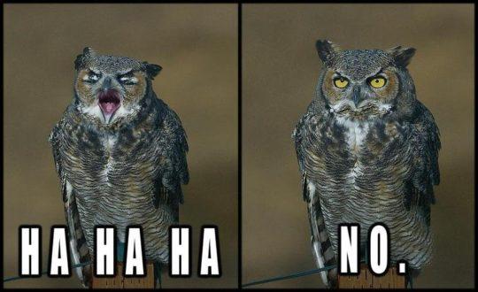 Hahaha_No_Owl