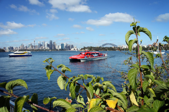 The view of Sydney from Taronga Zoo