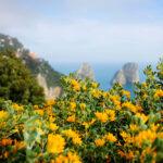 Captivated by Capri