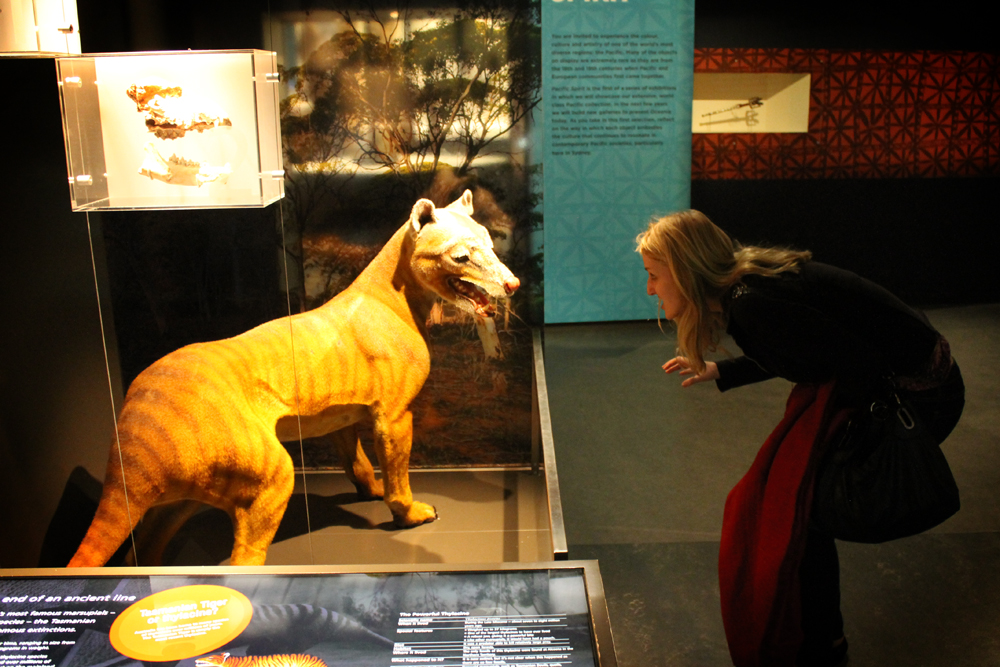 Staring down a thylacine