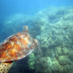Australia at Its Finest: Snorkeling the Great Barrier Reef