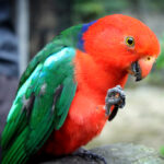 The Village in the Rainforest: Kuranda, Australia