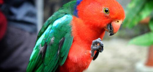 Kuranda Birdworld, Australia