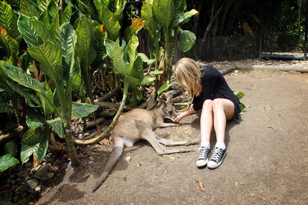 Kuranda Koala Gardens, Australia