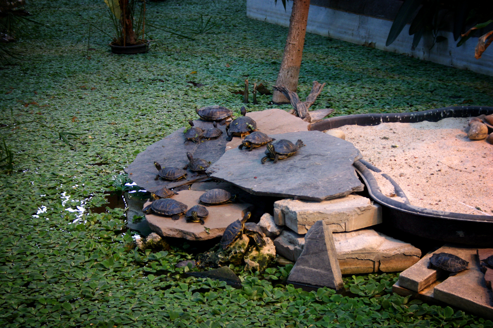 Turtles, Atocha, Madrid