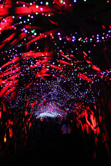 Christmas lights at the L.A. Zoo
