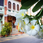 Malaysian Culinary Paradise? A Food Tour of Penang