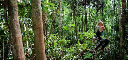 Cuyabeno Reserve, Amazon, Ecuador