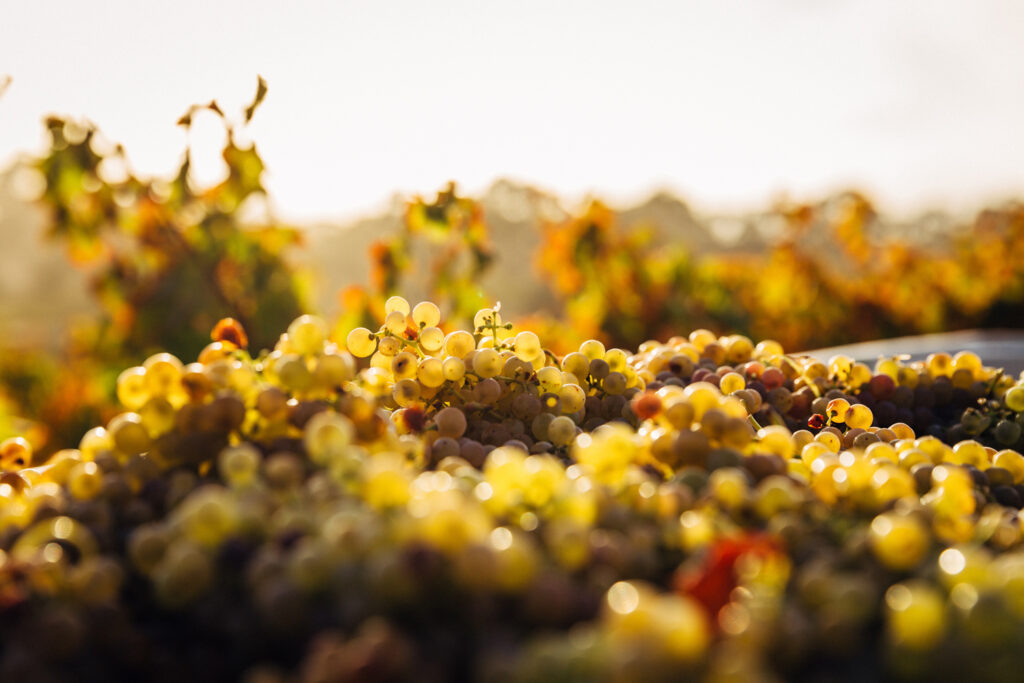 Barossa Valley, South Australia wine tasting