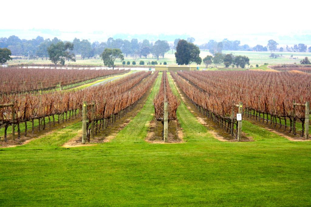 Yarra Valley, Victoria, Australia wine tasting