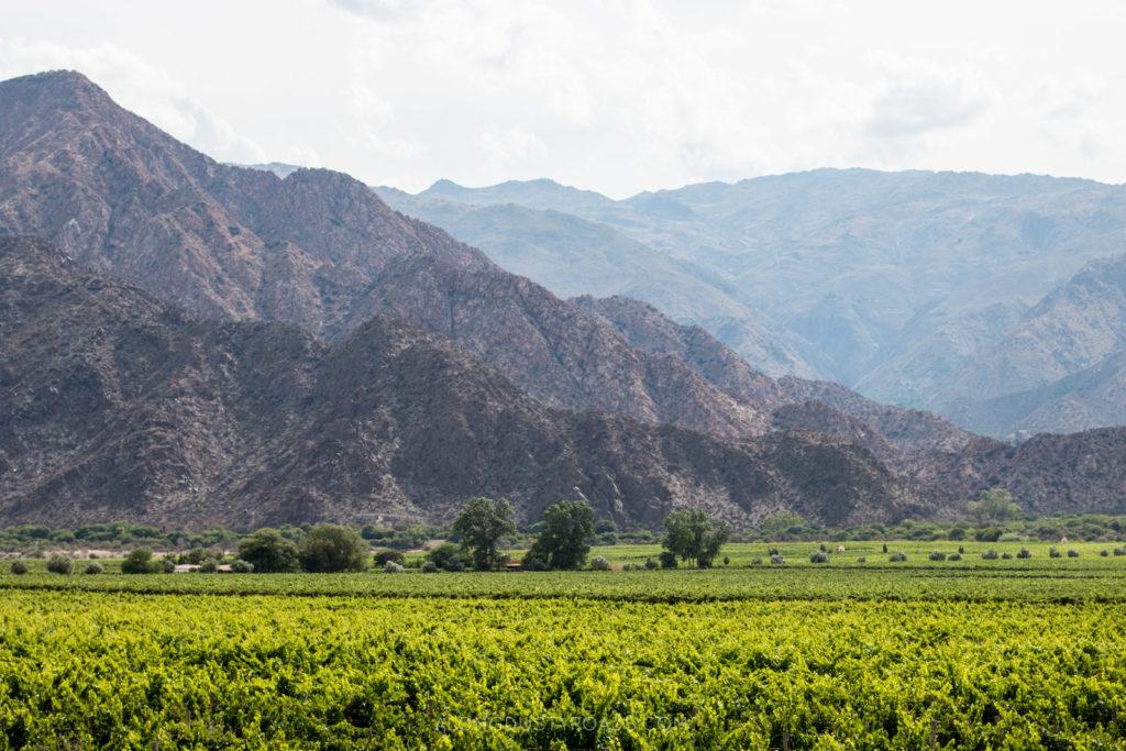 Cafayate, Argentina wine tasting