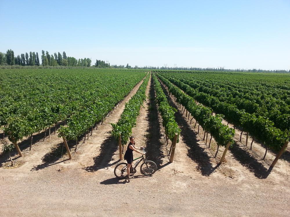 Mendoza, Argentina wine tasting