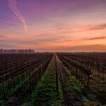 Wine Tasting Around the World: Travelers Share Their Favorite Spots