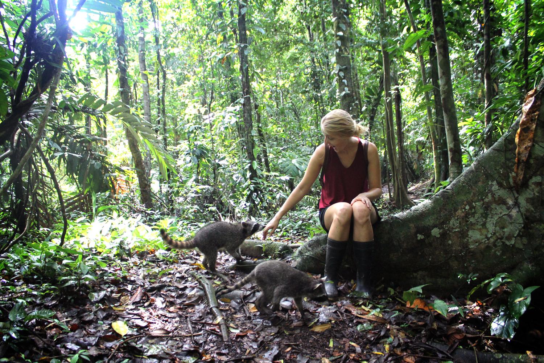 Puerto Viejo, Costa Rica raccoons