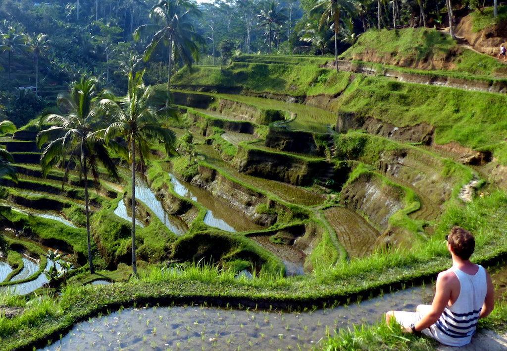 Ubud, Bali rice terraces