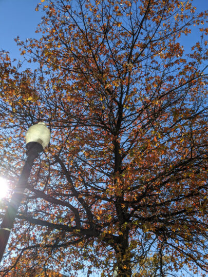 Washington D.C. autumn leaves