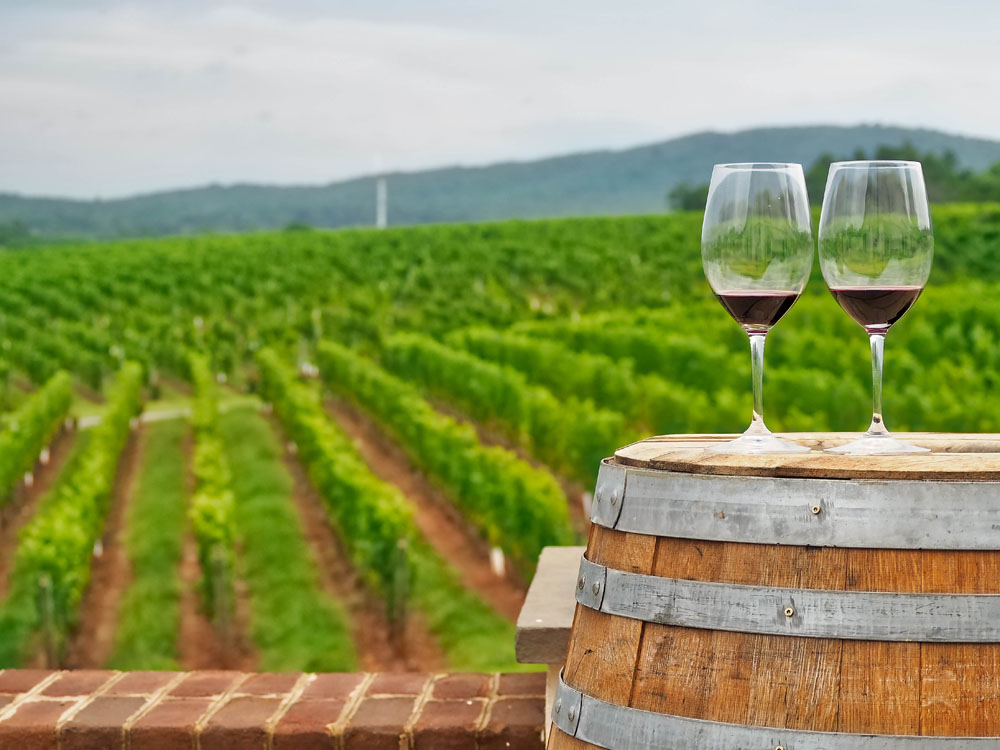 Wine tasting in Barboursville Vineyard, Virginia