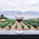 Where to Go Wine Tasting: Highlights from the U.S. and Canada